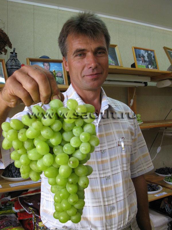 Саженцы винограда и деревьев купить